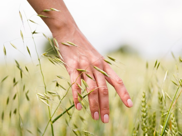 Person touching the wheat with its hand close-up Premium Photo