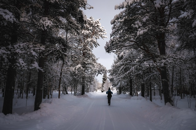 A person in warm clothes walking on a snowy path with trees around Free Photo