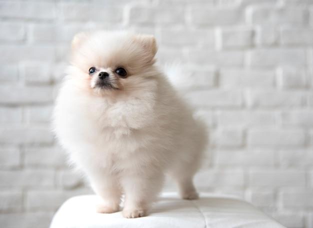 Pet Dog Breed Animal Portrait Puppy Mammal Free Photo
