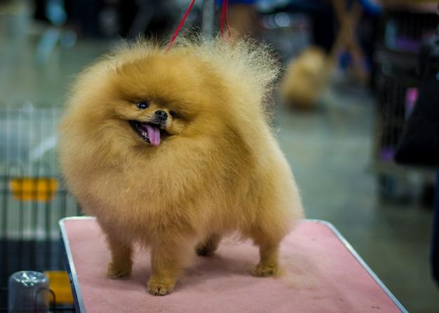 Pet shop grooming Premium Photo