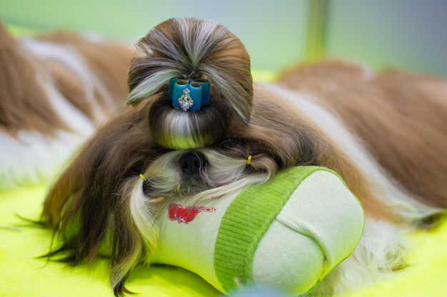 Pet shop grooming Premium Photo