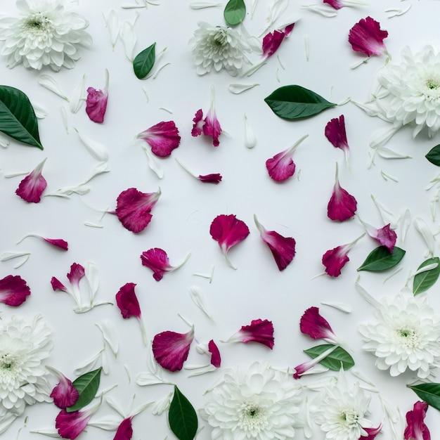 Лепестковые цветы с копией пространства на белом фоне. Premium Фотографии