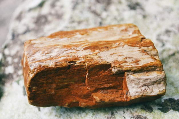 Petrified wood fossil, the old wood becomes stone by natural Premium Photo