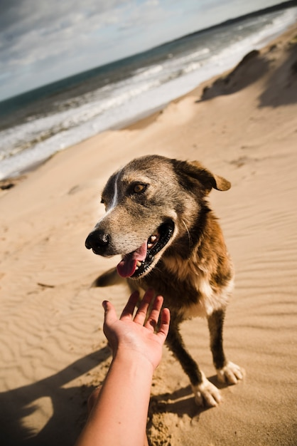 Petting dog on the beach Free Photo