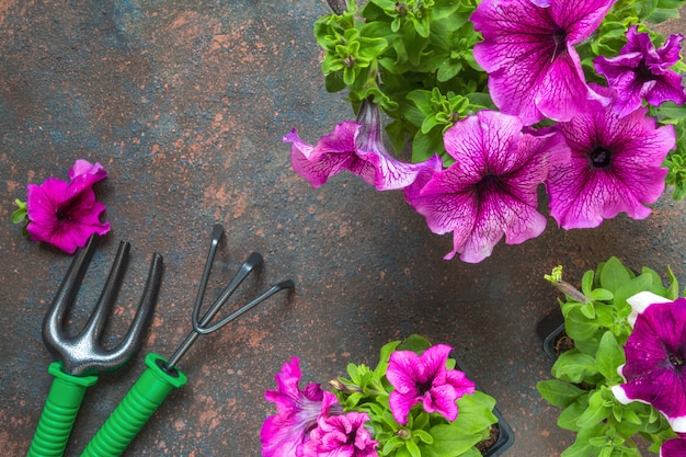 Petunia flowers in a basket, straw hat and garden tools on a wooden background. Premium Photo