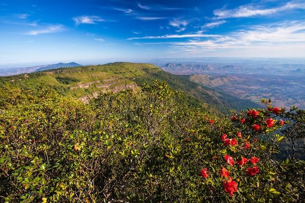 Pha-ta lern、phu luang野生生物保護区、ルーイ県タイの風景。 Premium写真