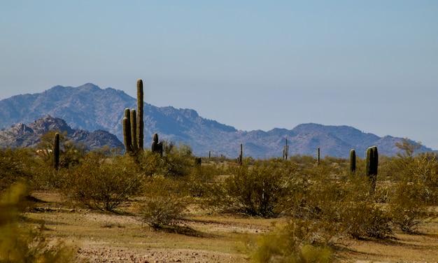 Phoenix arizona desert in south mountain hiking trail with saguaro cactus Premium Photo