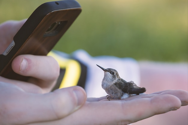 Phone taking a picture of a tiny hummingbird on a human hand Free Photo