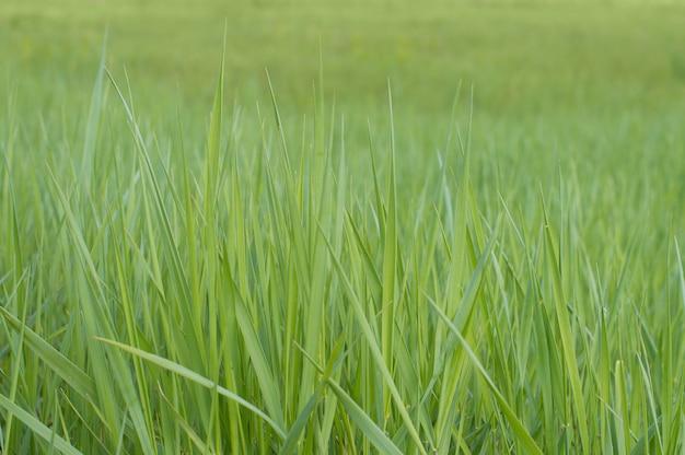 Фото фоновой текстуры зеленая трава Premium Фотографии