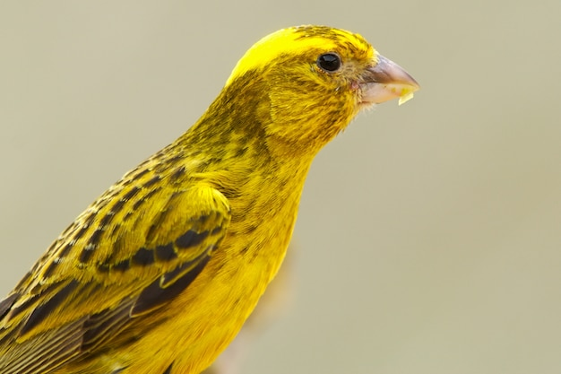 Photo of a bird of colors yellow Premium Photo