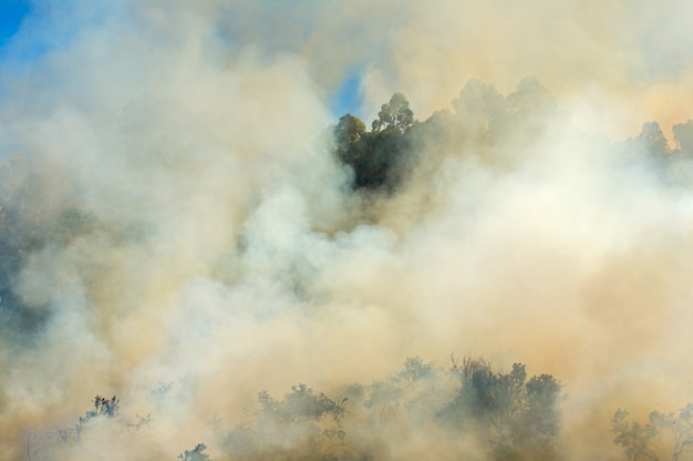 Photo of a fire in the forest Premium Photo