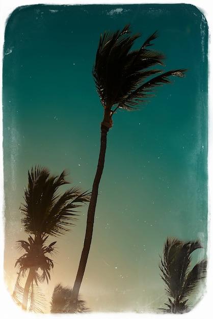 Фото в стиле ретро с волейбольной сеткой на пляже и пальмами за голубым летним небом Бесплатные Фотографии