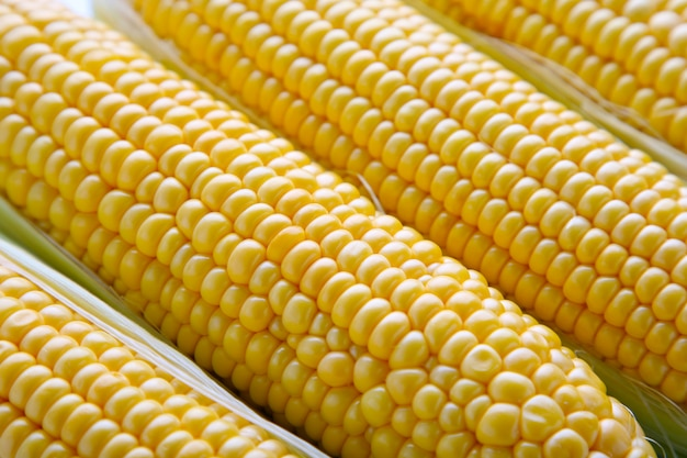 Photo of yellow corn background. fresh corn. Premium Photo