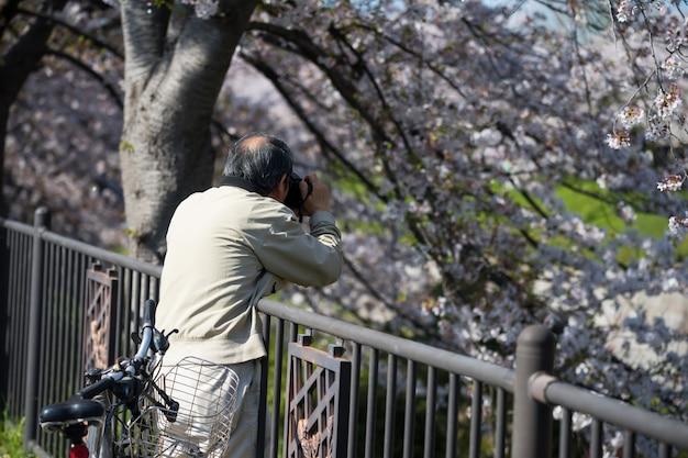 Photograph cherry blossom at gojo river, nagoya Premium Photo