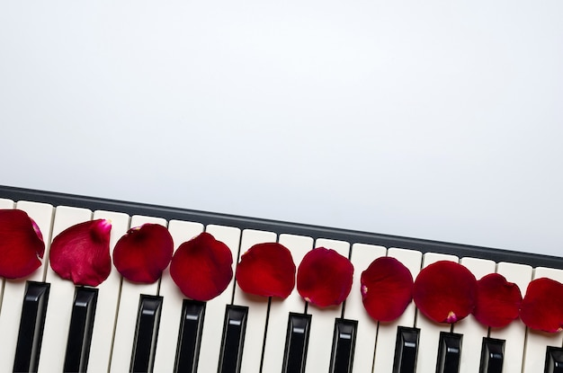 Piano keys with red rose flower petals, isolated, top view, copy space. Premium Photo