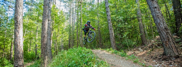 Picture of a cyclist surrounded by foliage trees in the woods Free Photo