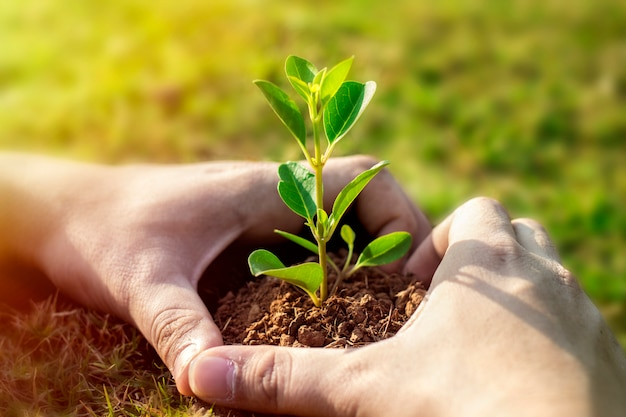 Picture of green plant in human hands. Premium Photo
