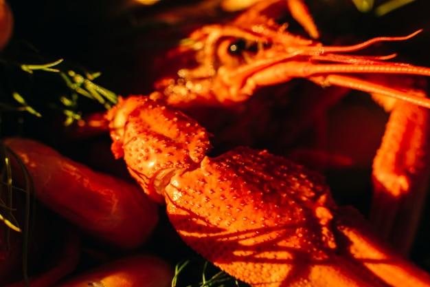 Изображение большого распаренного рака красно-оранжевого цвета на солнце Бесплатные Фотографии