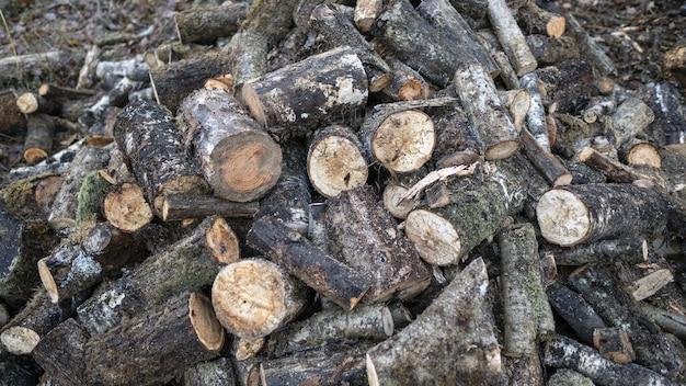 Изображение бревен деревьев на земле в окружении листьев и веток Бесплатные Фотографии