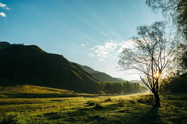 Picturesque morning landscape in the mountains. through tree branches make their way rays of the sun. Premium Photo