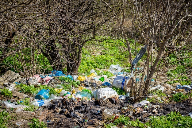 Pile of garbage in forest under  trees. environmental pollution. problems of ecology Premium Photo