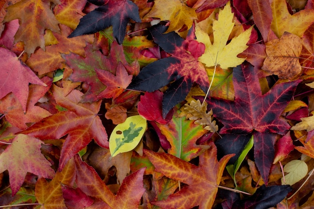 Pile Of Multi Colored Autumn Leaves On Ground Autumn