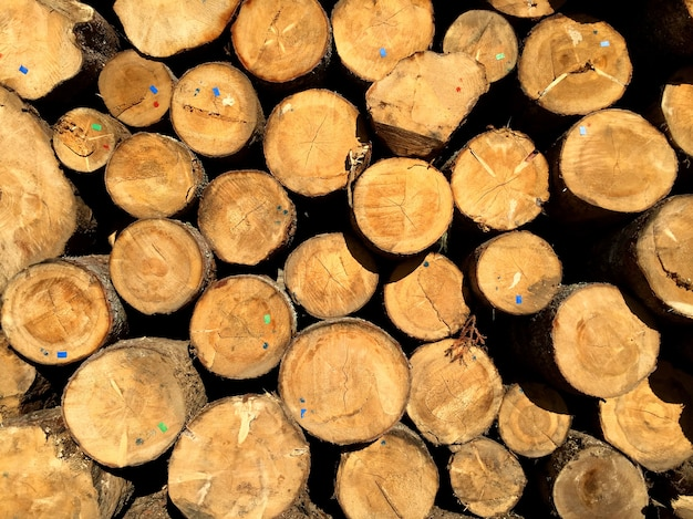 Pile of pine logs ready for cutting into planks in wood processing industry Free Photo