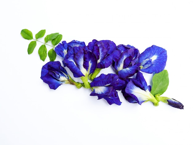 Piles of fresh blue butterfly pea flowers isolated on white. Premium Photo