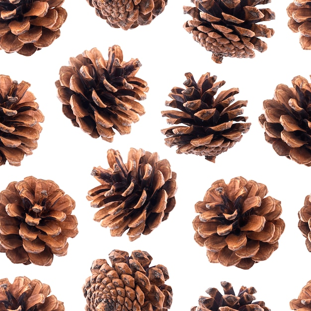 Pine cones seamless pattern Premium Photo