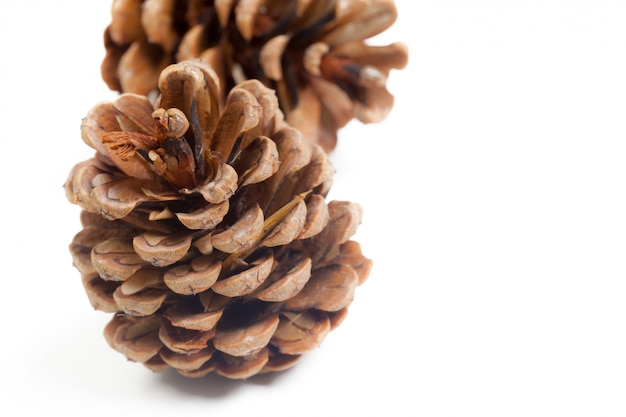 Pine cones on a white background Premium Photo