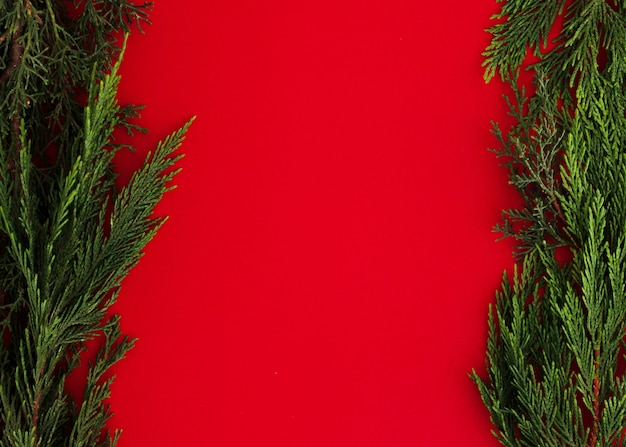 Pine leaves on a red background with copy space Free Photo