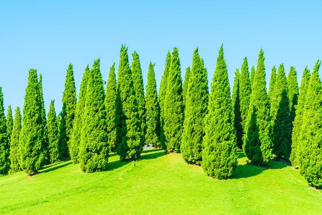 Pine tree Free Photo