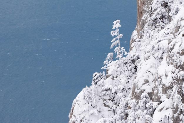 冬の山の松の木 Premium写真