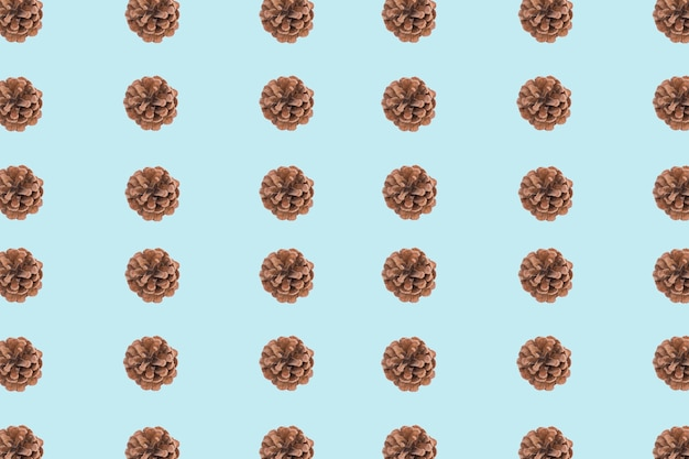 Pinecone blue and brown background Free Photo