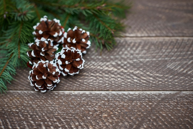 雪模様で飾られた松 無料写真