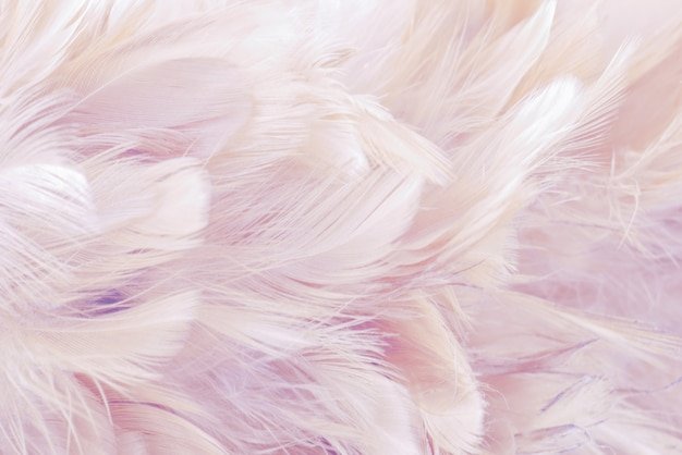 Pink abstract background bird and chickens feather texture Premium Photo