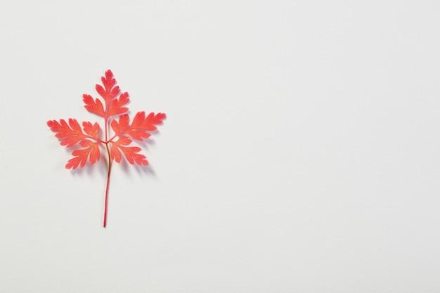 白地にピンクの秋の葉 Premium写真