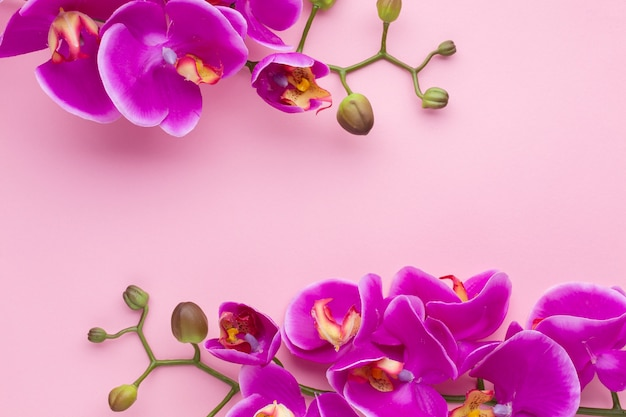 Pink copy space background with orchid flowers Free Photo