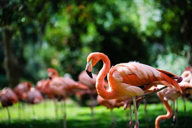 緑地に対するピンクのフラミンゴ Premium写真