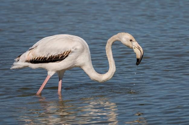 沼地の自然公園のピンクのフラミンゴ Premium写真