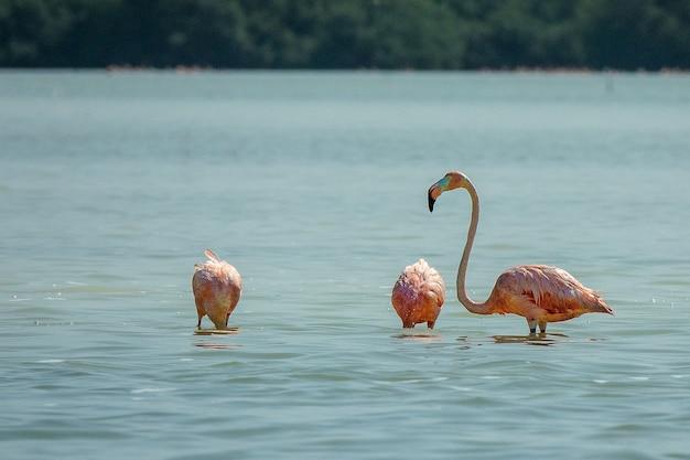 昼間に水中に立っているピンクのフラミンゴ 無料写真