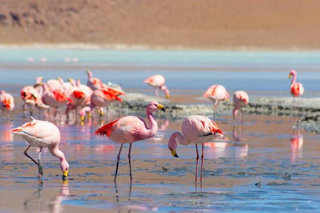 Pink flamingos Premium Photo