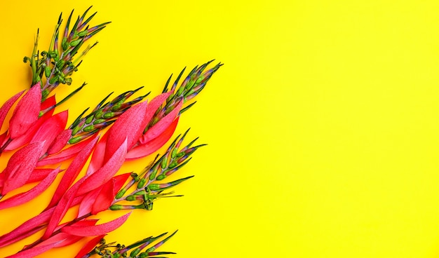 Pink flower of billbergia on a yellow background Premium Photo