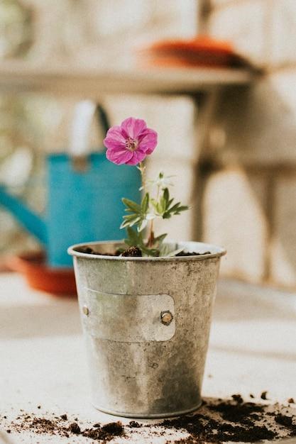 金属製の植木鉢にピンクの花 無料写真