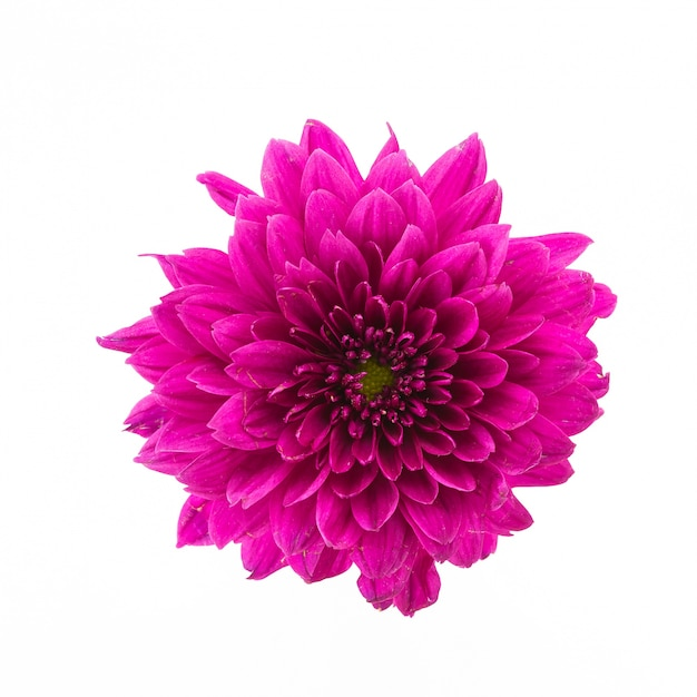 Pink Flower On A White Background Photo