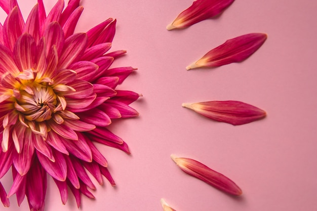 Pink flower on a pink background. female health concept. a reference to tenderness, care and kindness. Premium Photo