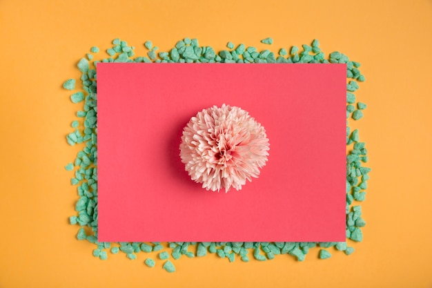 Pink flower on pink rectangle with rocks Free Photo