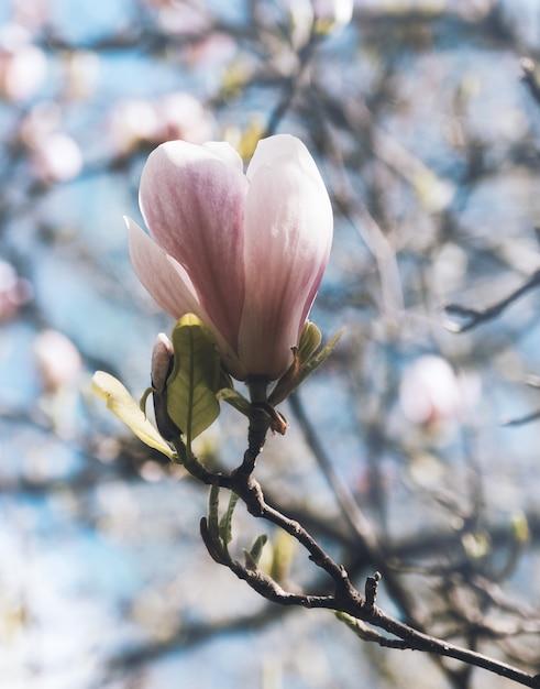 Fiore rosa sul ramo di un albero circondato da altri Foto Gratuite