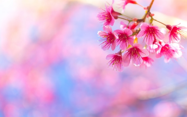 Pink flowers that are born from a branch of a tree Free Photo