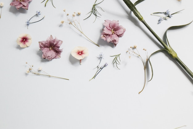 Pink flowers on white table Free Photo
